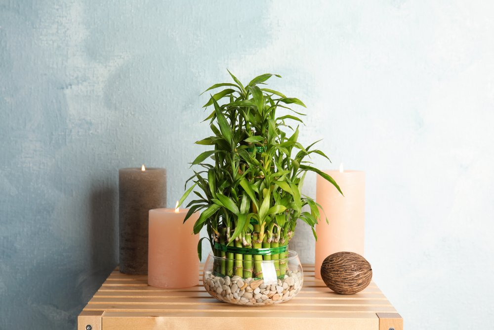 plants that don't need sunlight